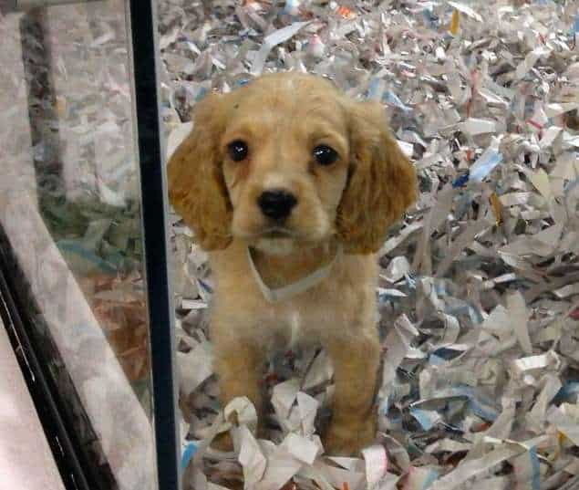 No More Selling Pets in California Stores 3