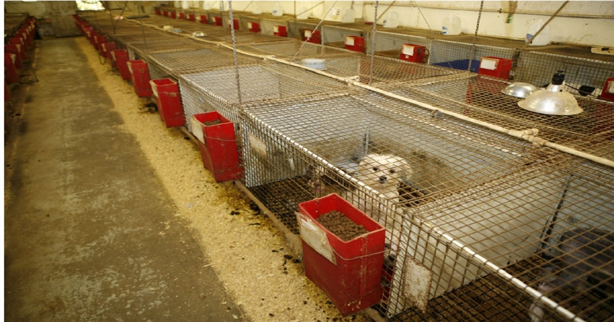 No More Selling Pets in California Stores