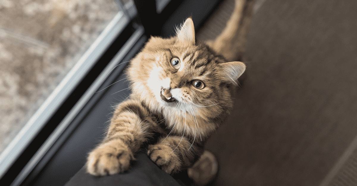 Scientific Benefits of Having a Cat 1