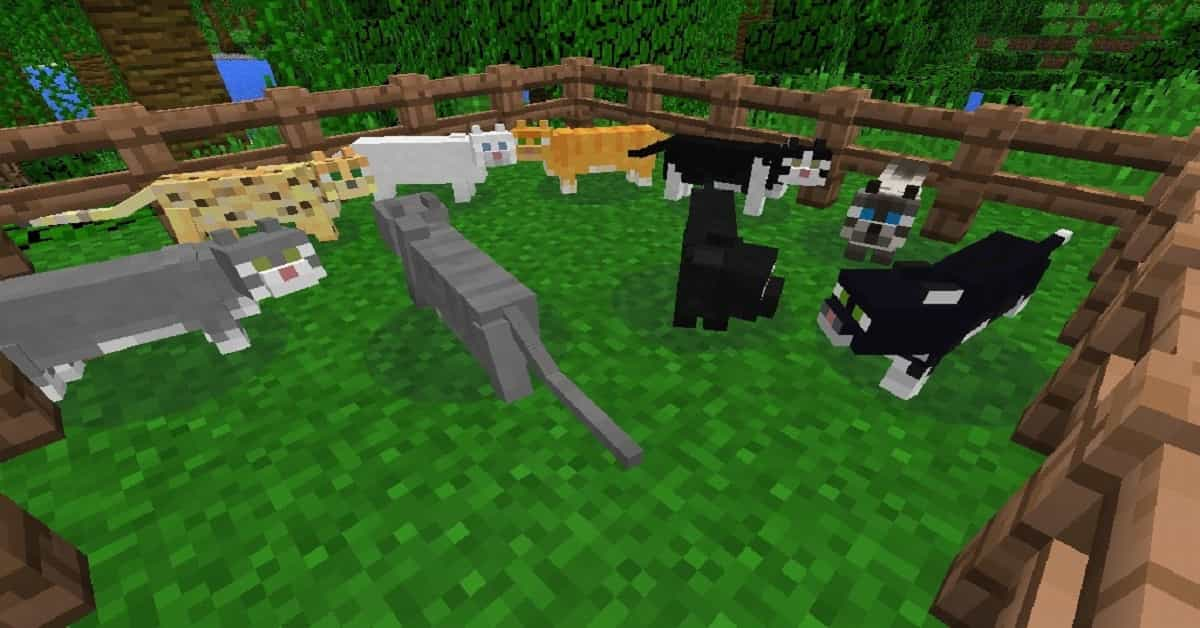 Cats in Minecraft – How to Tame and Make Them Your Pet