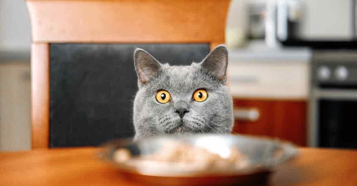 Gravy Cat Food