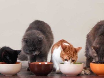 Tasty Homemade Cat Food Gravy Recipes for Your Pet