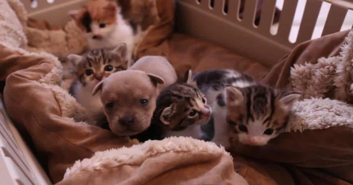 Rescue Cat Befriends Cute Orphan Puppy
