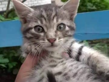 Stray Kitten Loses Her Mother in a Road Accident
