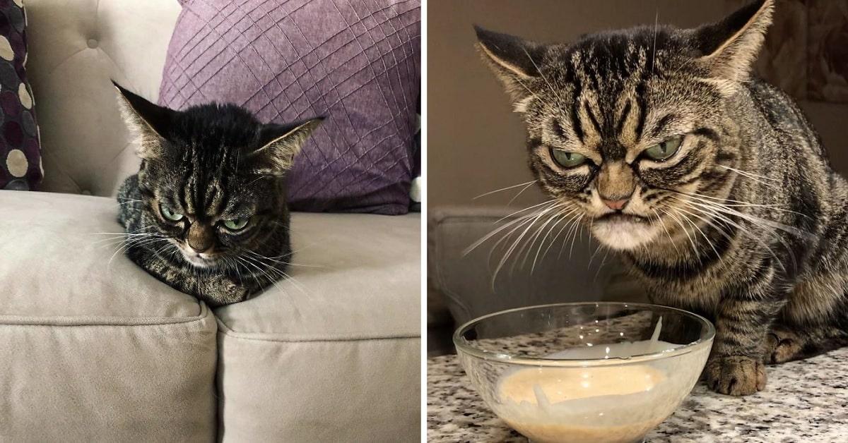 Kitzia is the Internet's New Favorite Grumpy Cat