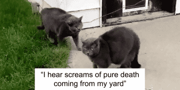 Woman Leaves Cat Outside, When She Goes to Take Her in She Finds a Clone And Couldn't Tell Who Was Who