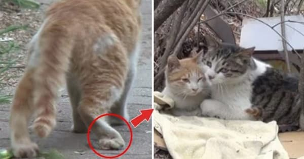 A Cat Brings Friendship Goal to The Next level When He Takes Care and Feeds his Disabled Best Friend
