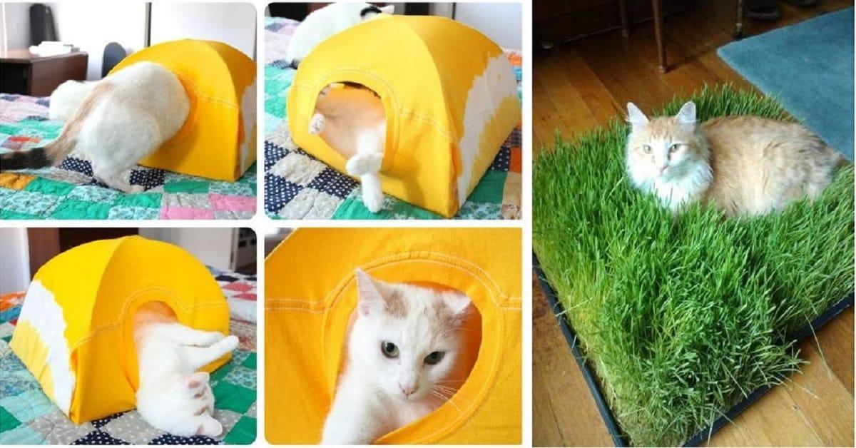 Hacks That Make Cat Owners' Lives Easier