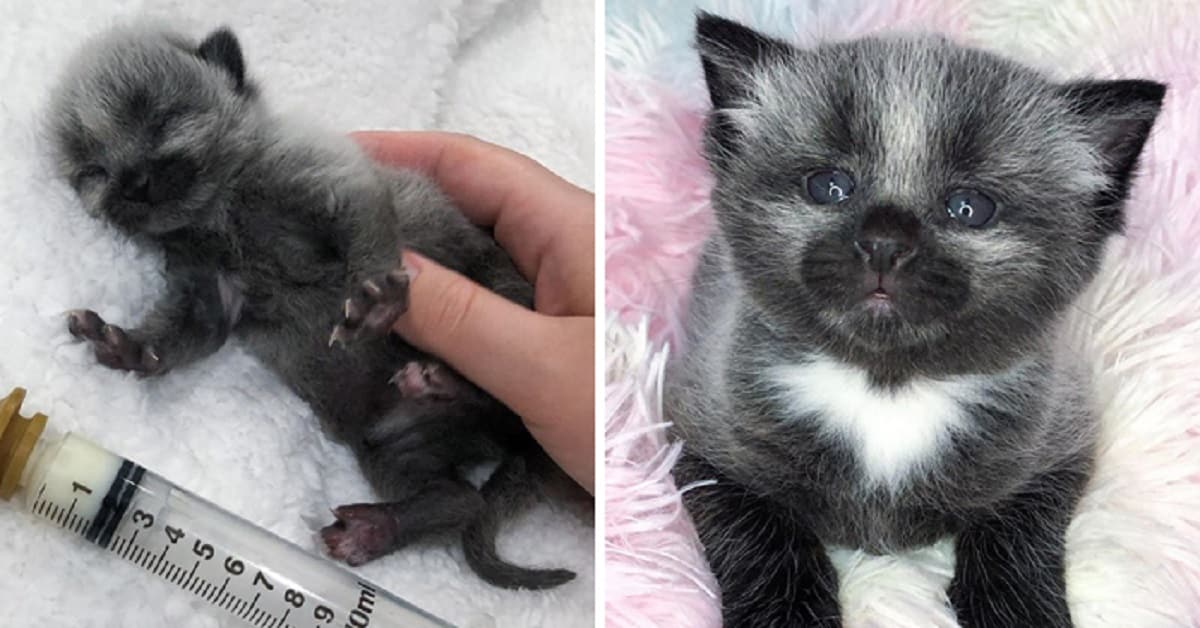 An Abandoned Kitten Found on Road Has a One-Of-a-Kind Coat