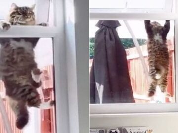 Woman Catches a Cat Burglar Trying to Break in Her Home