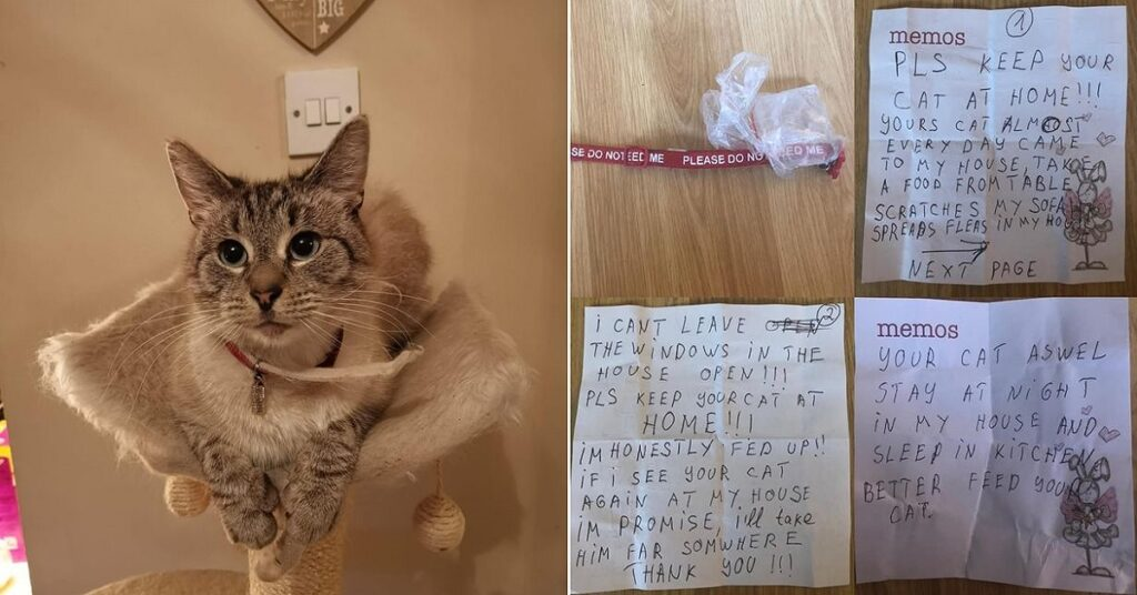 Cat Returns Home with a Dangerous Note Slapped on its Collar