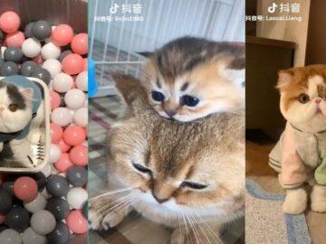 Cat TikToks We Didn't Know We Needed
