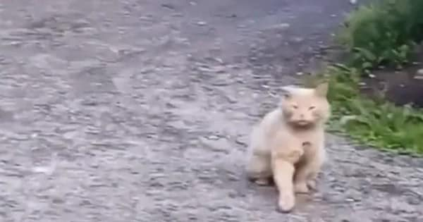 Man Proves that All Cats Are Secretly German