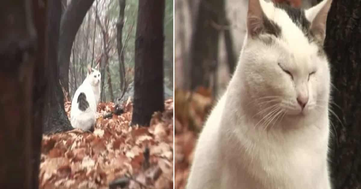 Sad Cat That Can't Accept the Reality of Being Abandoned