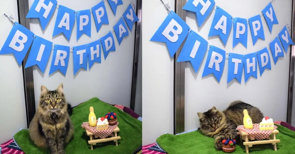 Shelter Cat Still Looking for Home After Throwing a Birthday Party And No One Came