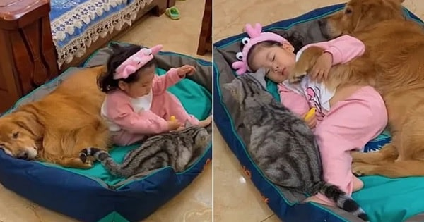 The Cutest Pics of a Baby Girl with Her Pets