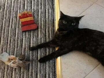 Woman Makes Apology for Thieving Cat Who Keeps Stealing Neighbours' Possessions