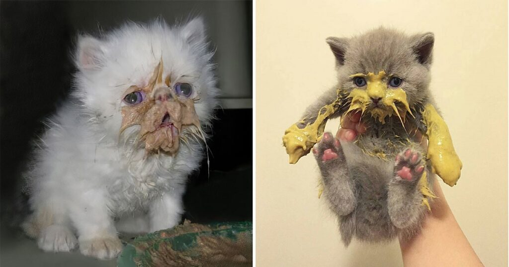 20+ Pics of Cats Making a Mess When Eating