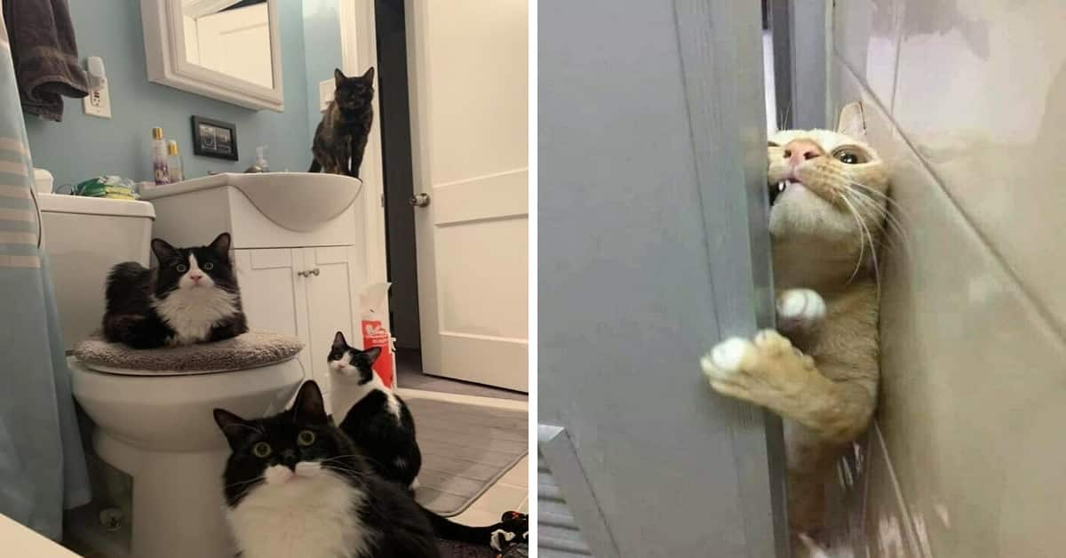 Cats Shamelessly Disrespecting Personal Space