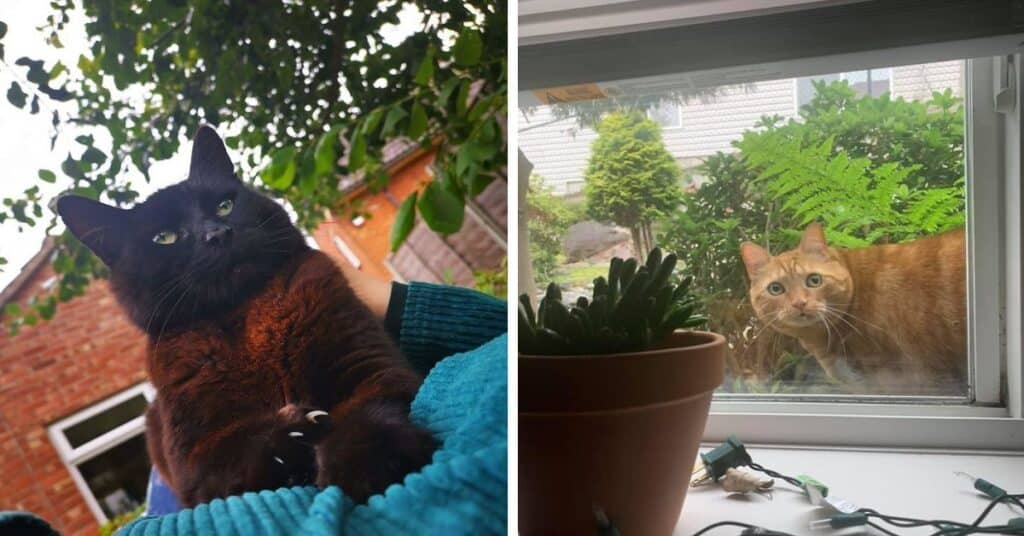 Facebook Group Where People Share The Best, Unexpected Encounters With Cats