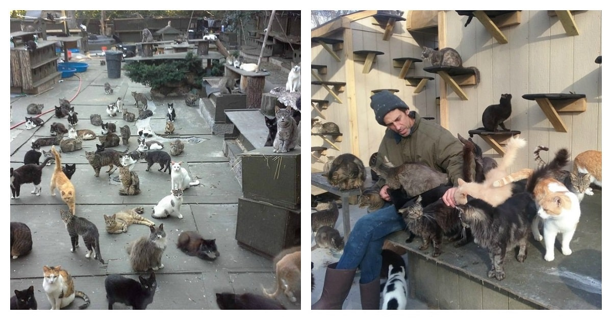 Man Saves More Than 300 Cats After Losing His Son