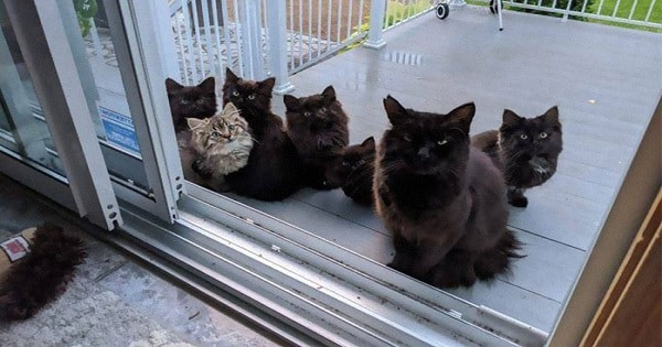 Stray Cat Brings Her Babies to a Woman Who Helped Her