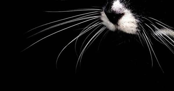 Cat Whiskers Facts You Probably Didn't Know