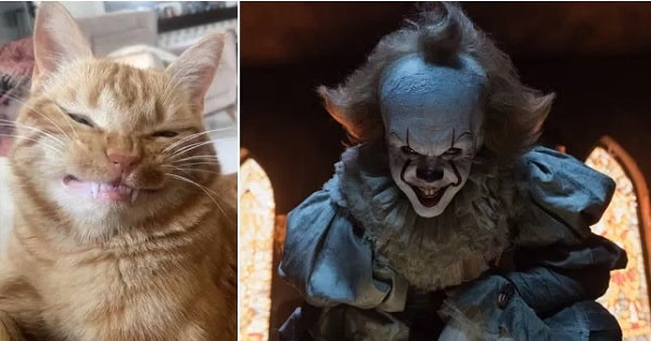 A Cat Looks Just Like Pennywise the Clown