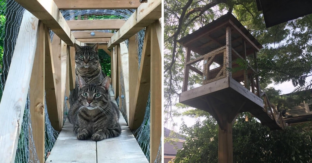 An Epic Treehouse for Your Fave Felines