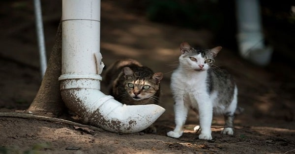 People Chip in To Help Brazil's Cat Island Starved by the Coronavirus Pandemic