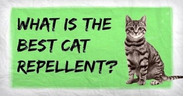 Best Cat Repellents 2021