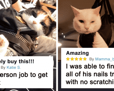 Funniest Comments About Amazon Cat Grooming Bags