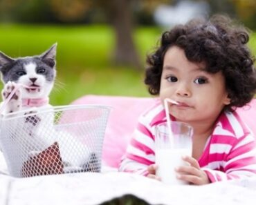 Top 5 Best Kid Friendly Cat Breed – Best Nonaggressive Cat Breeds 2021